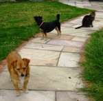 Three of my gardening supervisors